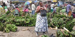 Mahakama ya Ndizi Mabibo banana market