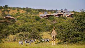 Mahali Mzuri Luxury Safari Camp. (kiwi)